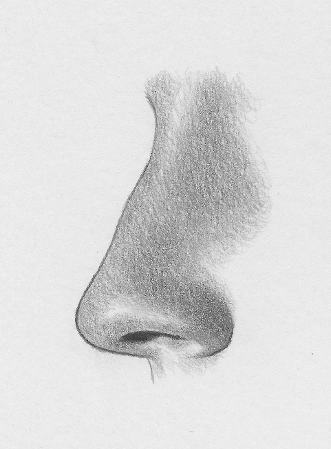 how to draw the nose profile 7