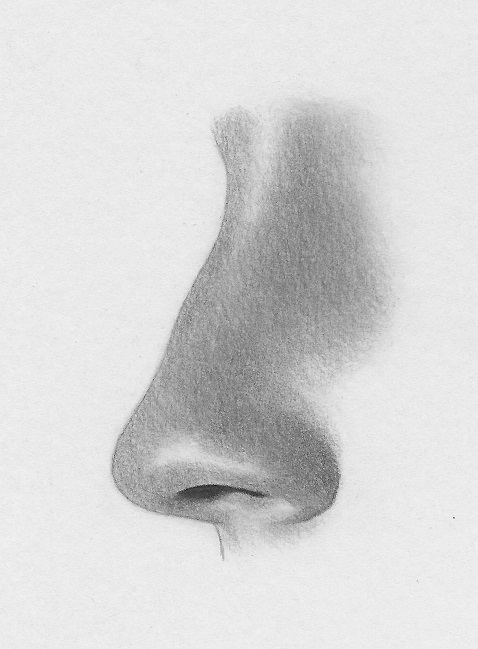 how to draw the nose profile 9