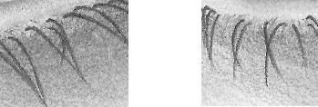 eyelash-overlapping