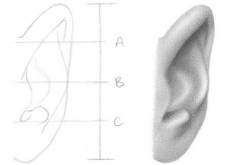 How To Draw An Ear From The Front Rapidfireart