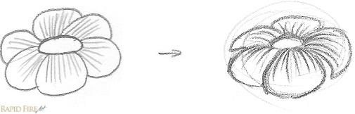 Flower contour lines example
