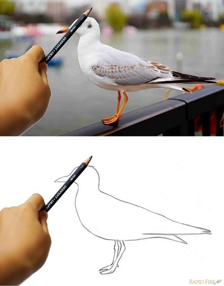How to draw with correct proportions_angles