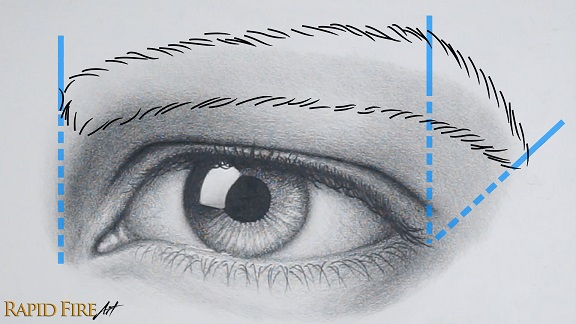 Draw male eyebrow outline